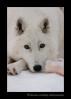 Wolf and Bone