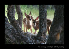 Gaye took this picture. These fawns were cute as they peered at us from behind the trees.