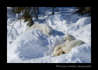 bear_family_nap