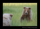 bears-playing