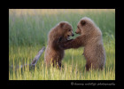 brown_bear_cub_scrap