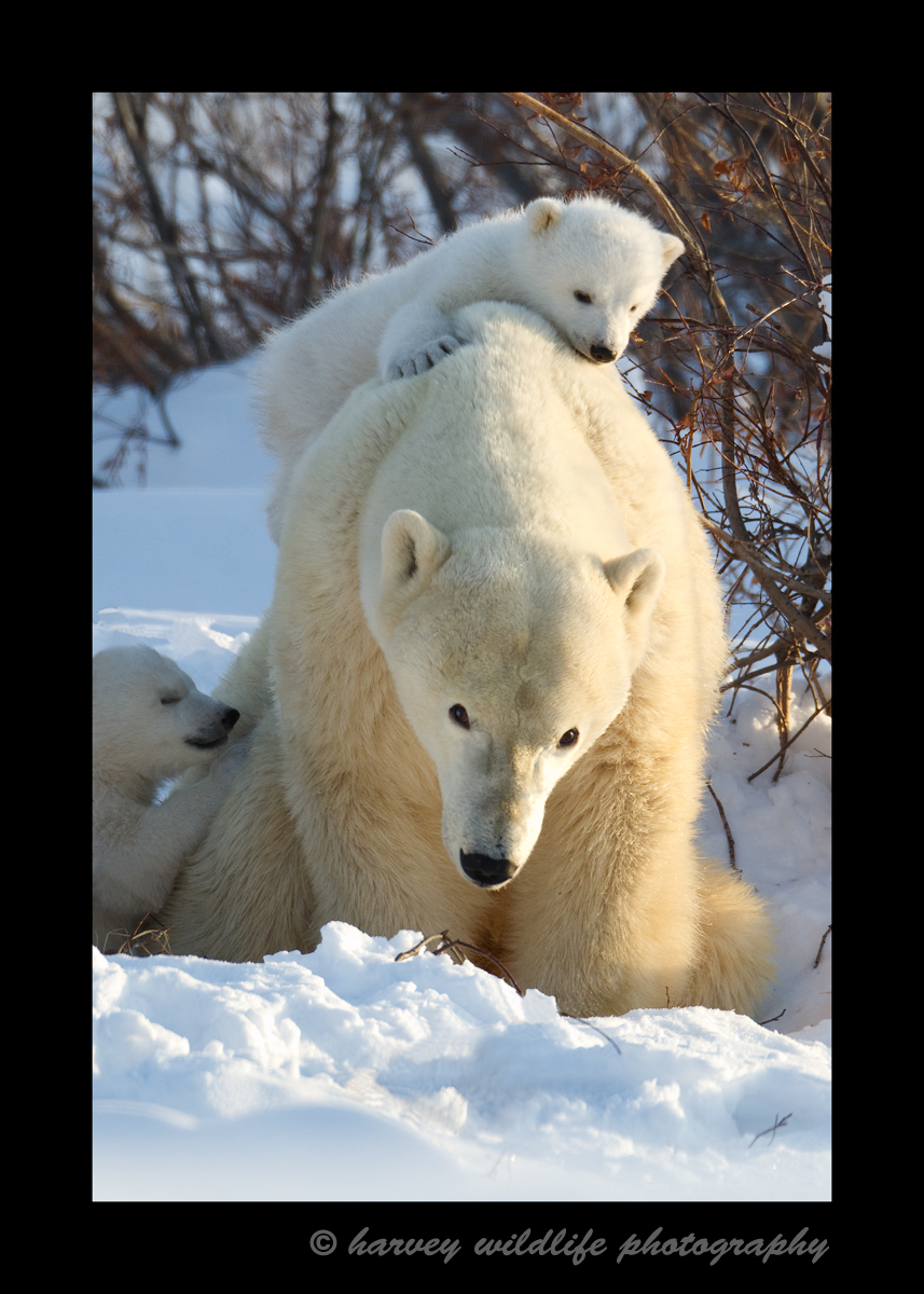 Climbing on Mommy