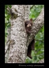 cub-sleeping