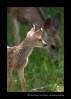 deer-IMG_6516