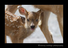 deer-fawn-and-mom-IMG_6567