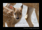 deer-fawn-and-mom