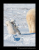 fighting_cubs