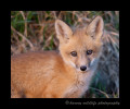 fox_2014