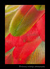 greenwing_macaw_abstract