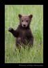 hi_five_bear_cub