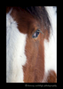 horse_eye_portrait