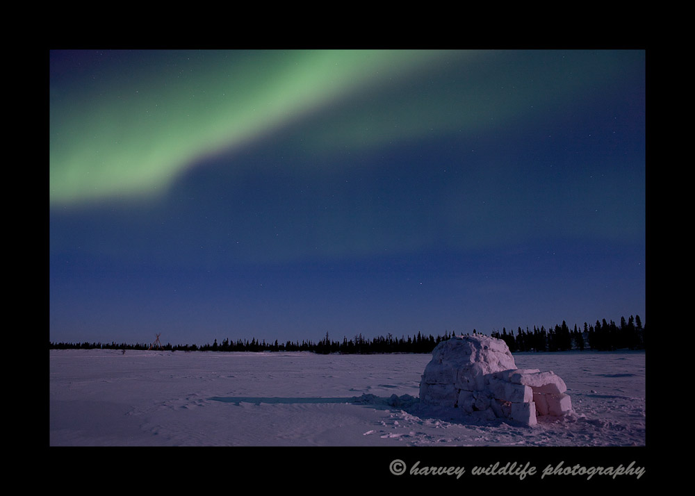 Northern lights over an igloo near Watchee lodge in Wapusk National Park, Manitoba, Canada.