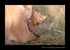 lion-mom-and-cub