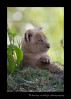 lion_cub_IMG_9842
