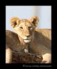 mara_lion_cubs
