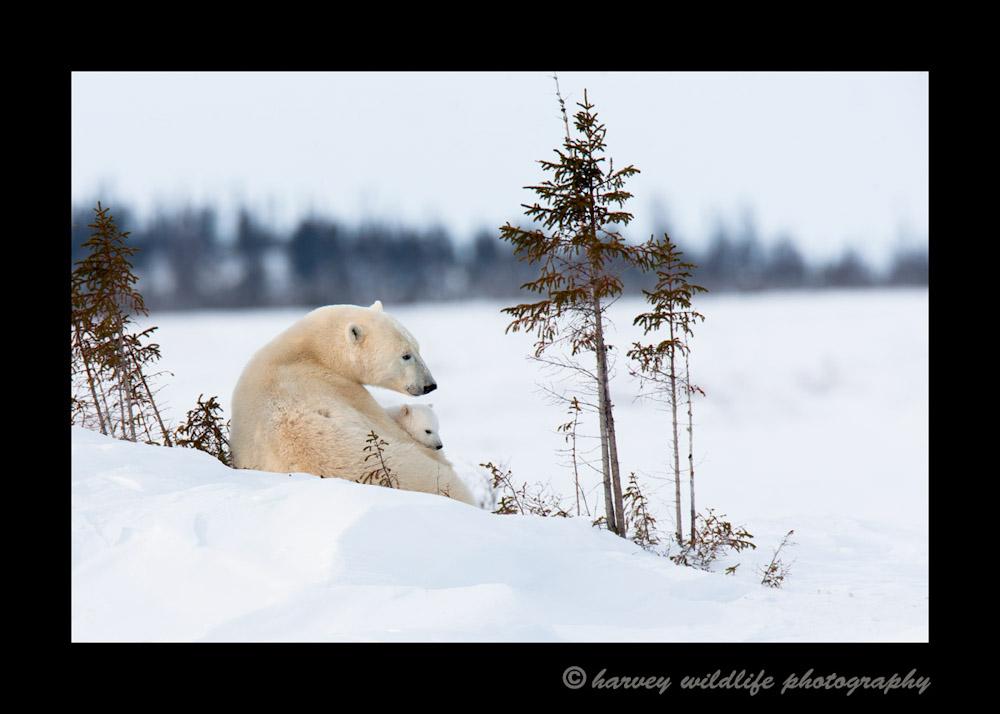 mom-and-cub-2010