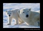 mom_and_cub_13
