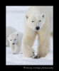 mon_and_cub_13