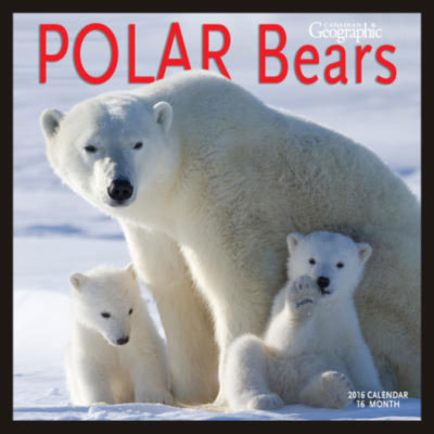 Harvey Wildlife Photography polar bear picture on the front cover of the 2016 Canadian Geographic Polar Bears calendar.