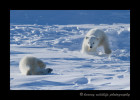 polar_bear_cub_games