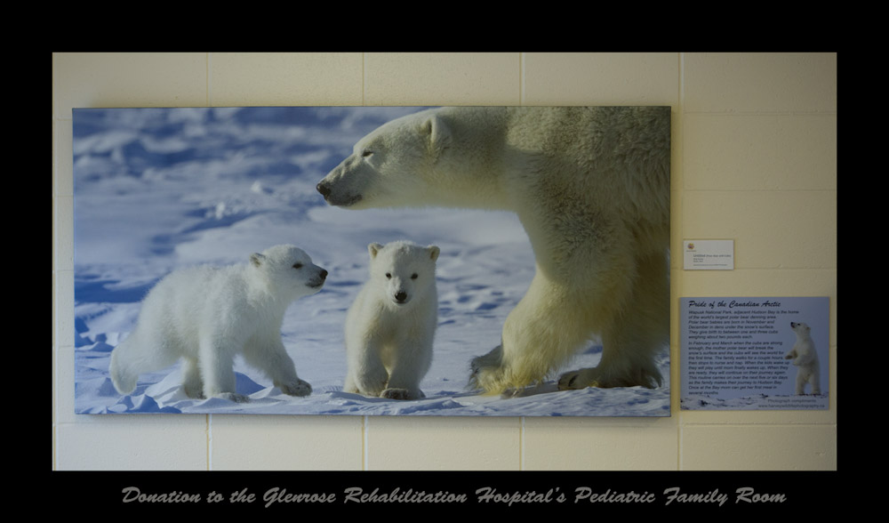 polar_bear_glenrose_hospital_donation