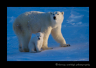 polar_bear_mom_and_cub_2013