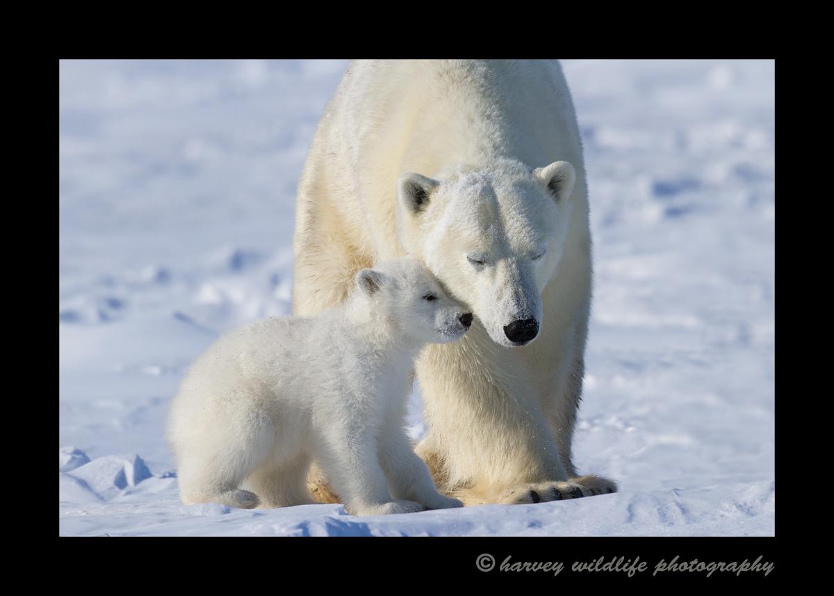 polar_love_for_mom