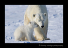 polar_love_for_mom