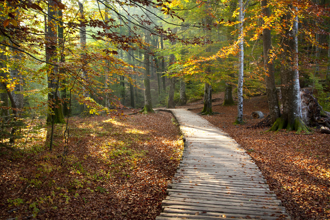 Autumn Pathway, Plitvice