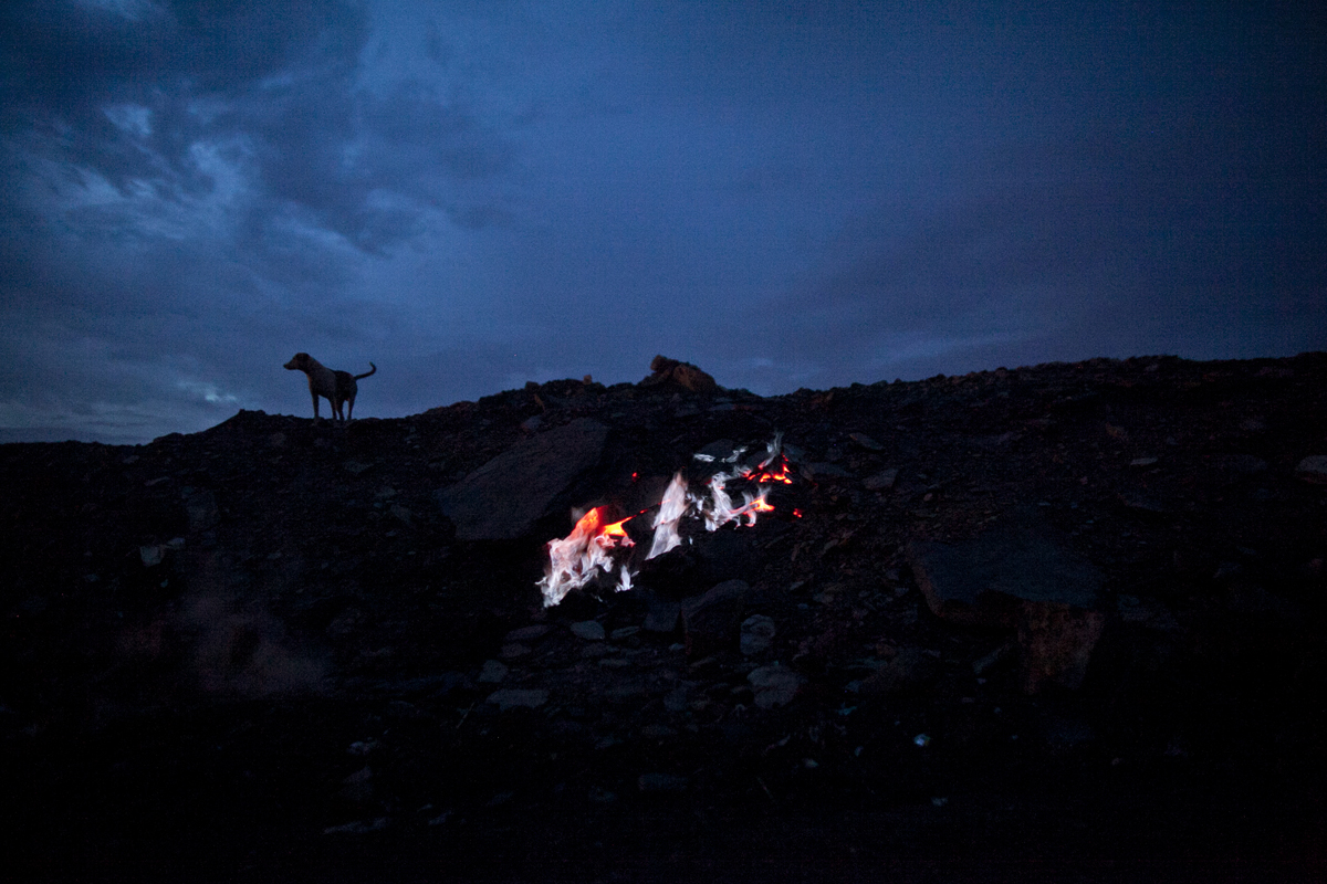 A dog looks out over burning underground coal in a village in Jharia.