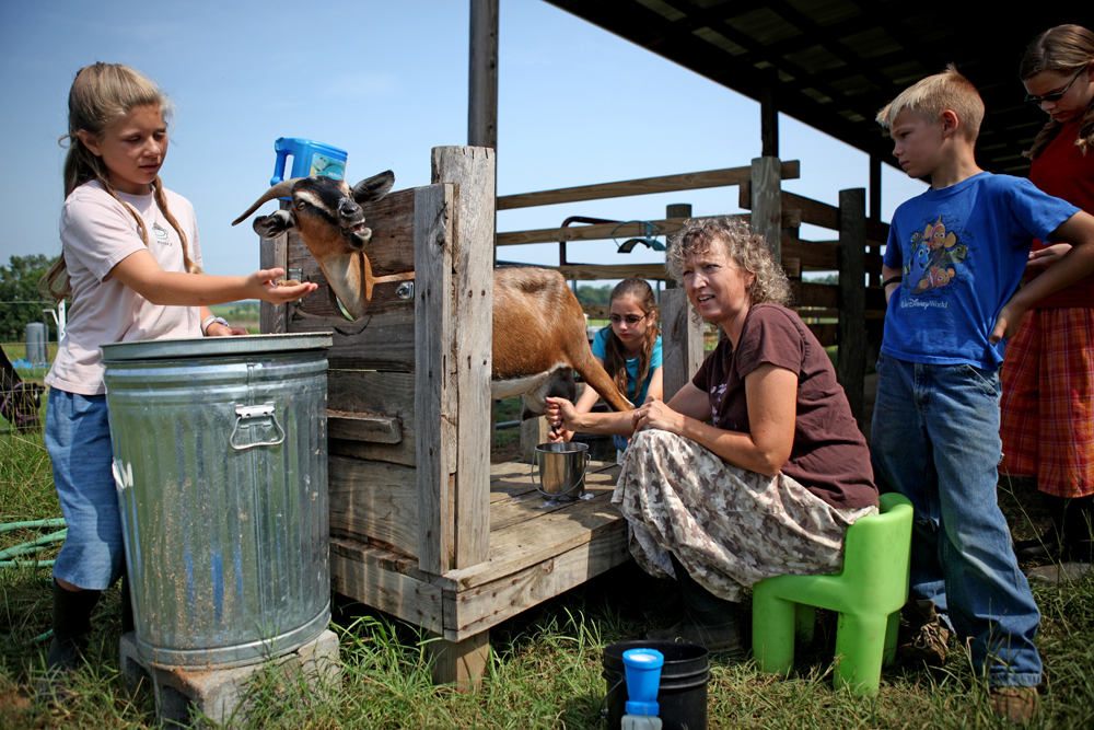 Members of the Foster family work together to milk one of their goats on their farm near Wicksburg, Ala.,Thursday, July 5, 2012. In a health-conscious world, people are often looking for alternatives and goat meat and goat products are getting more attention. Goat milk has generally been considered a good alternative to whole cow's milk for people who are lactose intolerant and has similar nutritional values as whole cow's milk. Goat cheese has fewer calories, fat and cholesterol than cow's cream cheese.