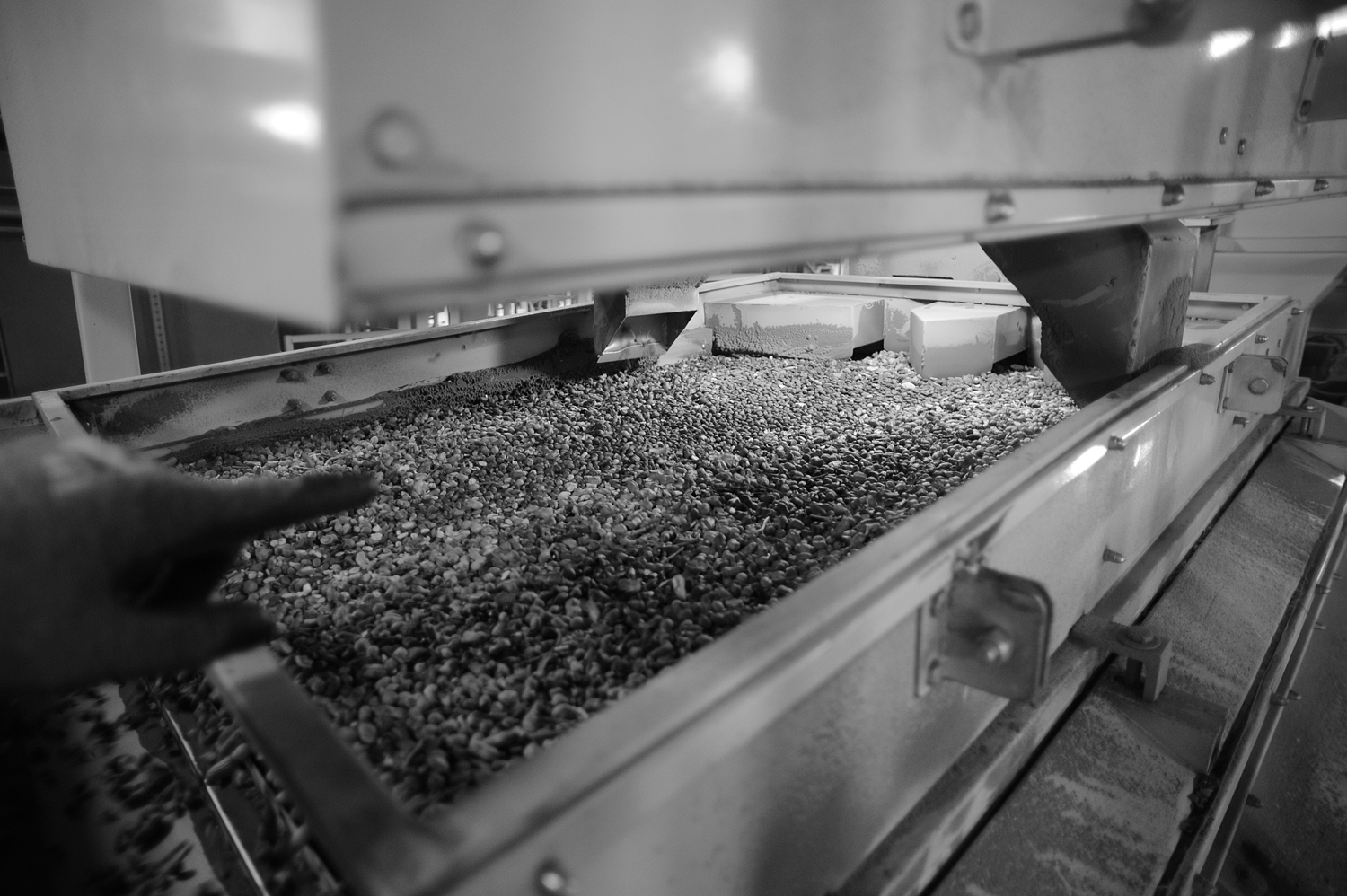Peanuts are seen making their way through the shelling machinery at Golden Peanut Company.