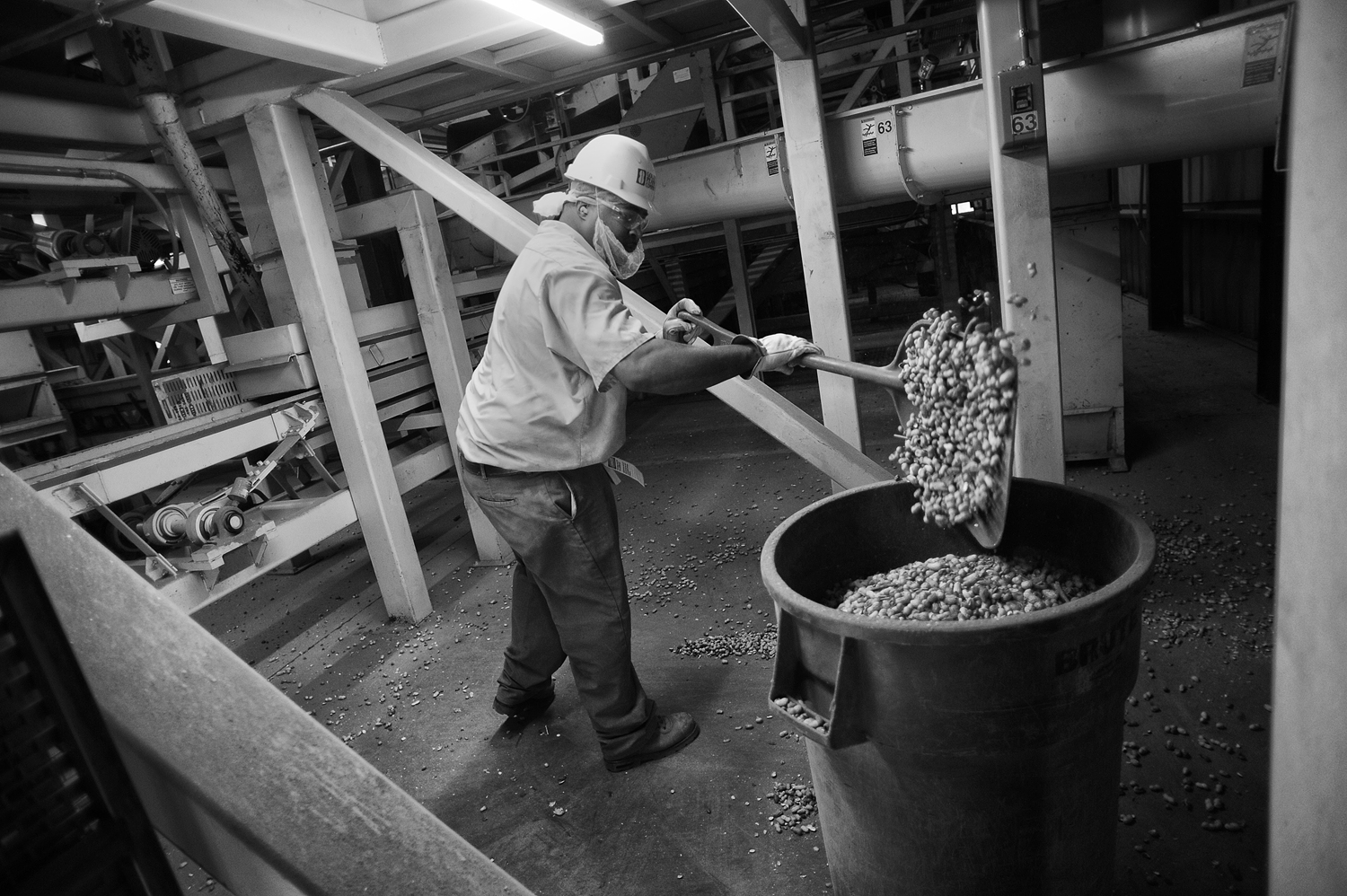 Prentice Jackson, an employee of Golden Peanut Company, shovels spilled peanuts into a container at the company's shelling facility in late October of 2011.