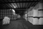 Large bags of shelled peanuts are seen in the cold storage facility at Golden Peanut Company.
