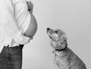 A fun studio maternity photography session with a pet dog.