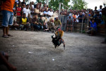 Two roosters fight in a ring in the Colmera area of Dili.