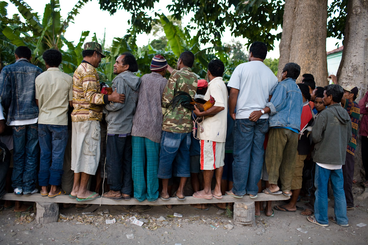 Men huddle together to watch futu manu in Baucau, Timor Leste.