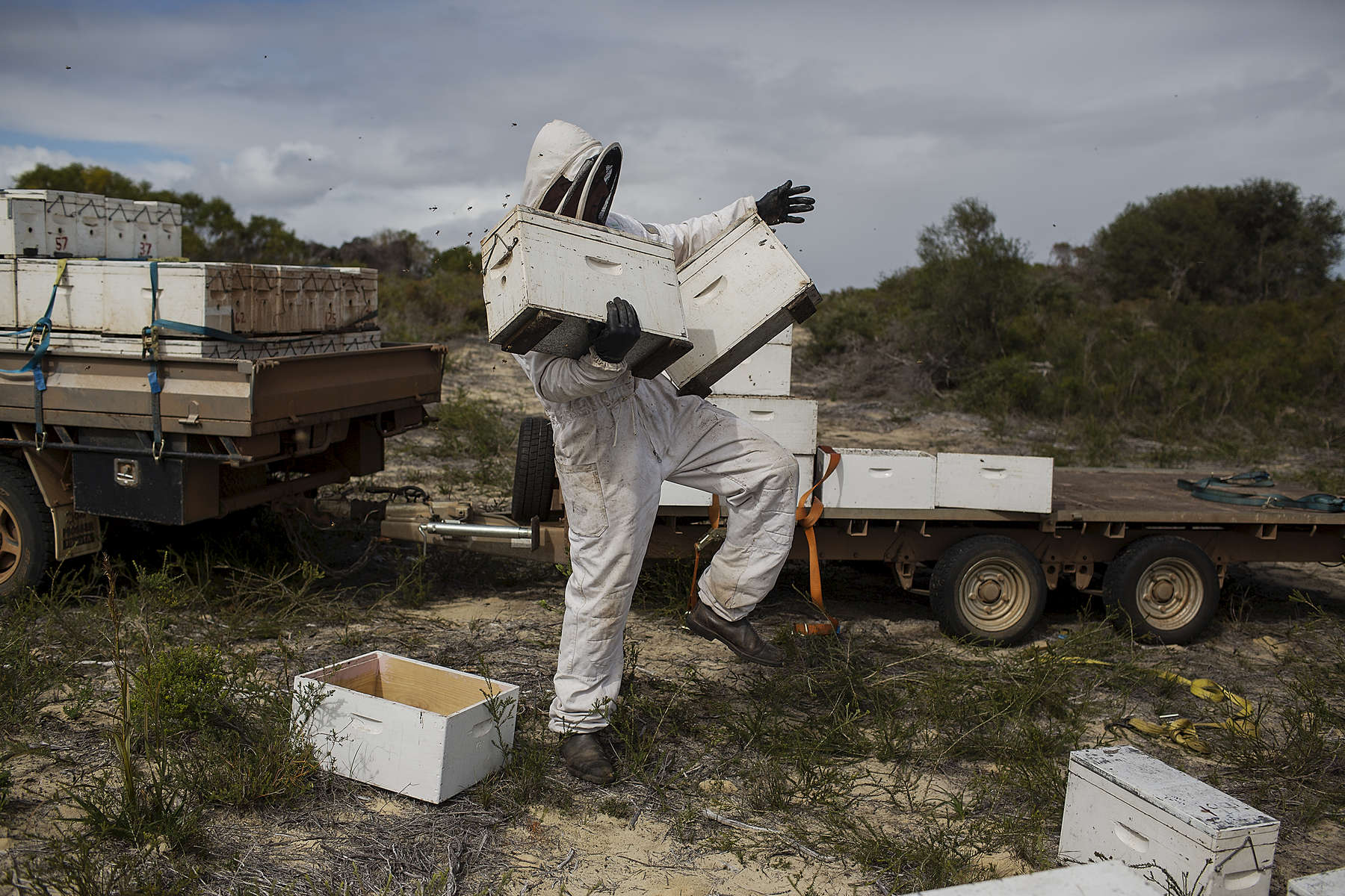 Brendan Fewster carries new hives to be added to the bee colony, a common practice at the end of the winter in preparation for spring. Brad Gresele and business partner Brendan Fewster keep a bee colony inside the Southern Beekeepers Nature Reserve outside Cervantes a small coastal town in Western Australia. 08/16/2013  Credit : Conor Ashleigh for the International Herald Tribune.