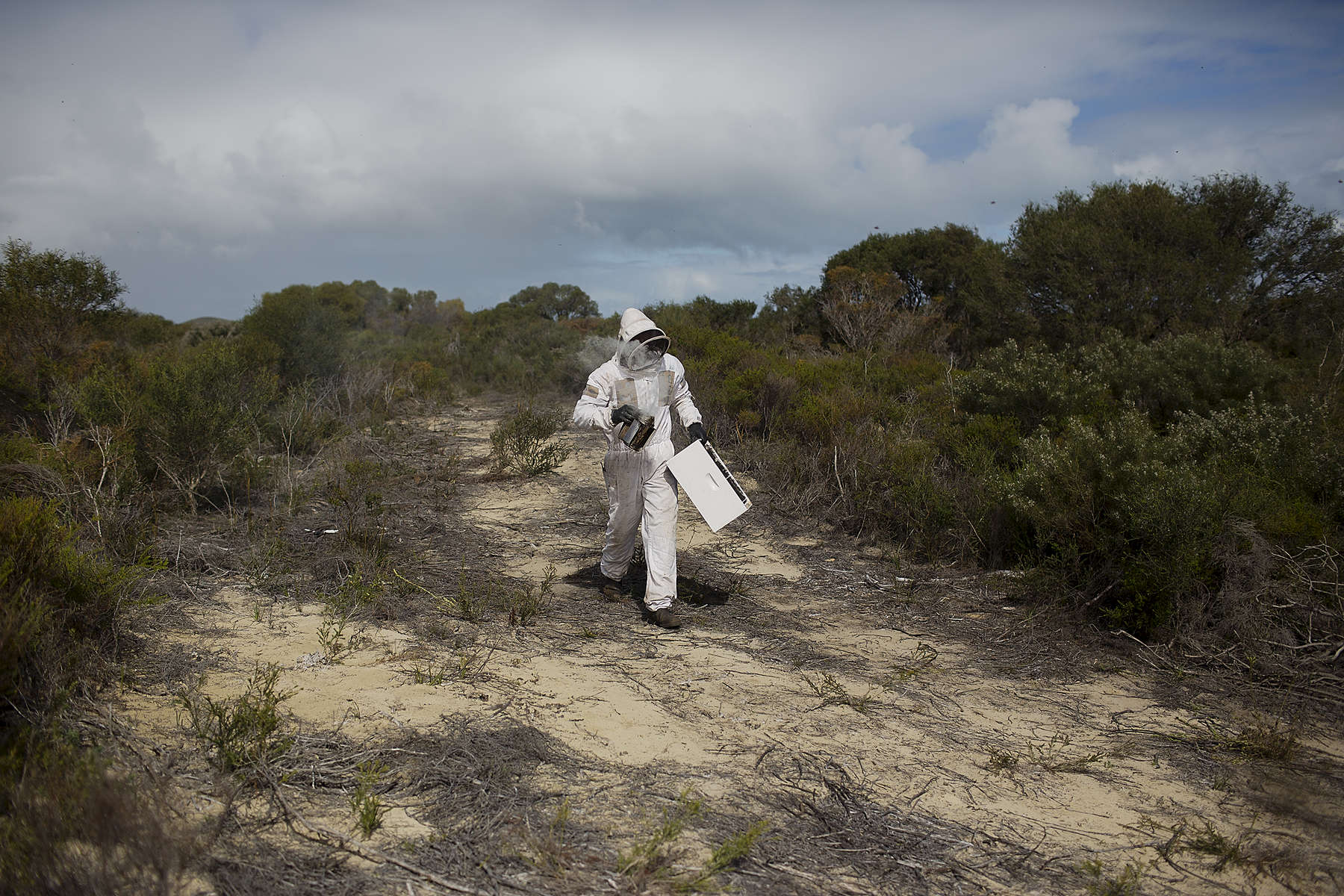 Brendan Fewster walks through the native bush towards the bee colony. Brendan Fewster and his business partner Brad Gresele have bee colonies at sites across Western Australia including the Southern Beekeepers Nature Reserve outside Cervantes a small coastal town in Western Australia. 08/16/2013  Credit : Conor Ashleigh for the International Herald Tribune.