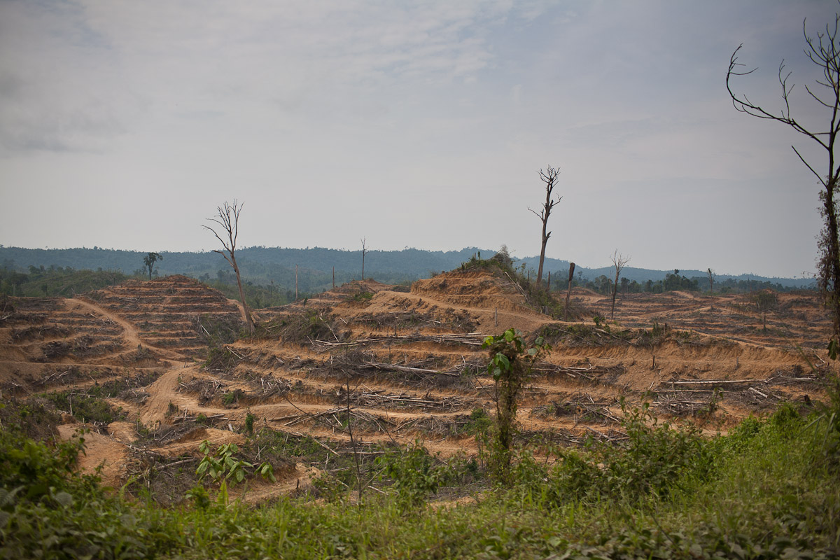 The State Land Development Minister said that in 2010 Sarawak recorded it's fastest rate of deforestation to make way for the largest oil palm state in Malaysia by 2020.
