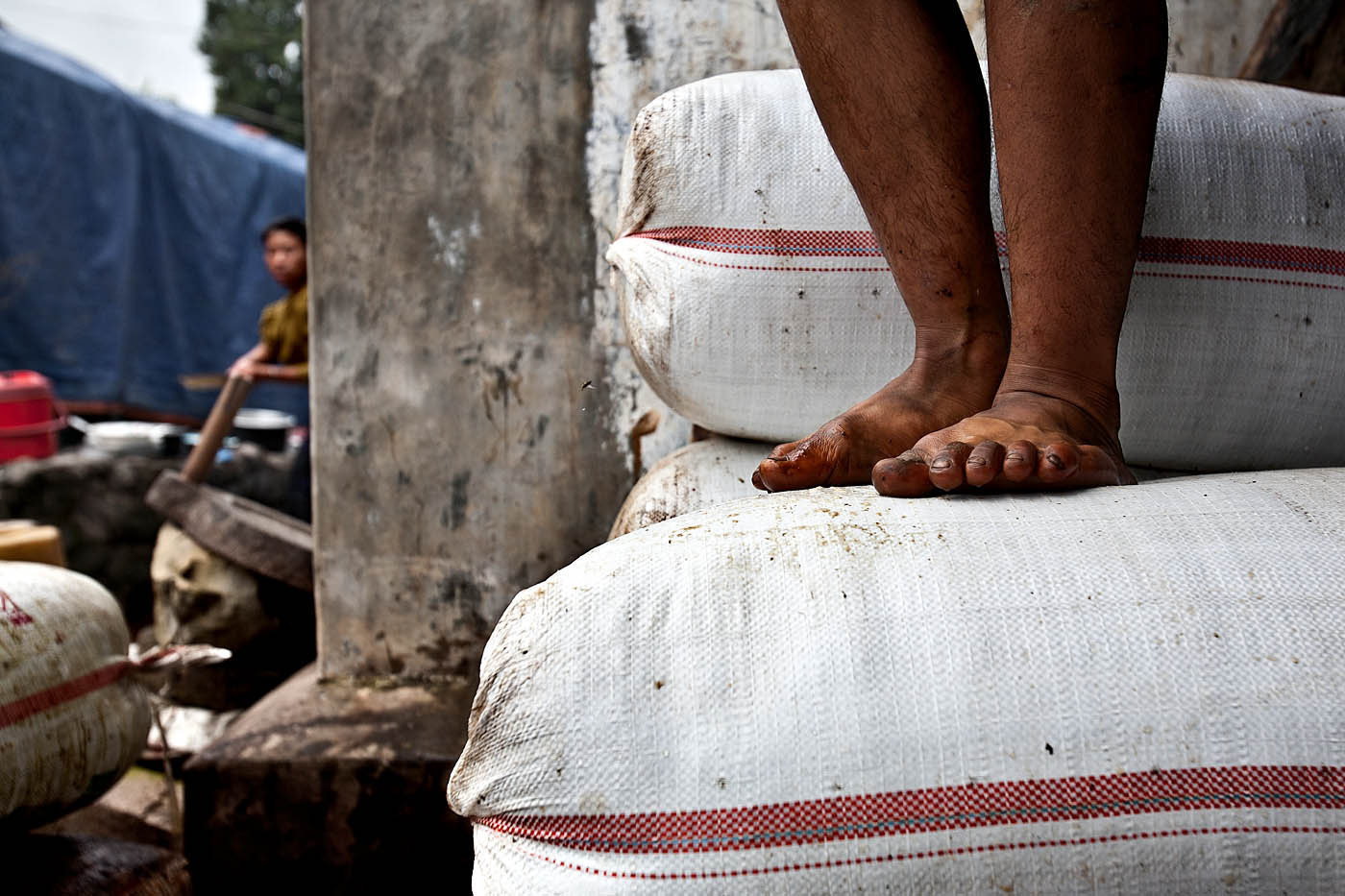 In an effort to maximize the capacity they can transport to larger markets, drivers generally compress tea sacks by foot before loading their trucks.