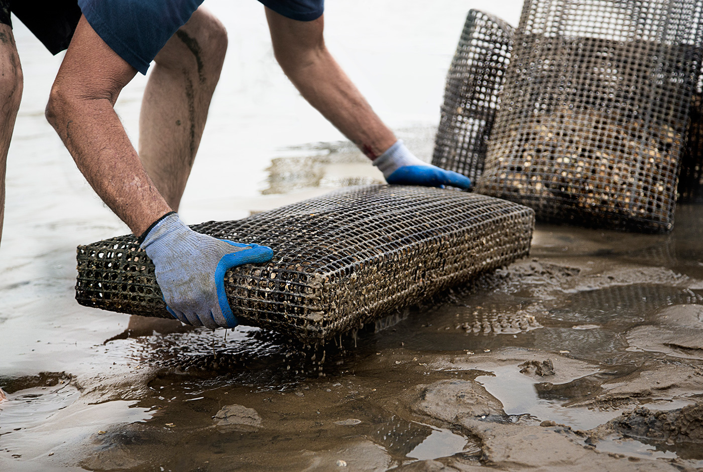 Editorial photography on location advertising oyster farmers.