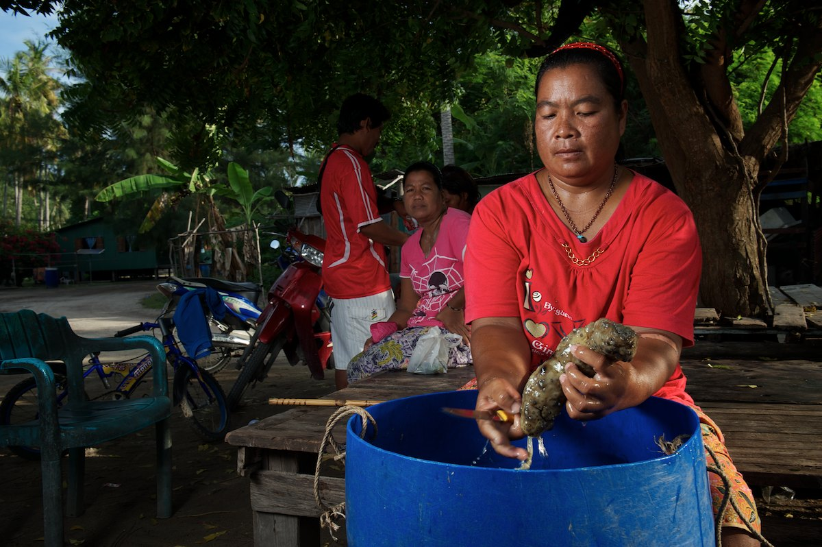 Yandah processes sea cucumber from the previous nights catch. Typically families work together to harvest sea life in the dry season, {quote}Pling Kamad{quote} or sea cucumber, used for medicinal reasons and sold to markets in Malaysia and China, are harvested from coral reefs at night, processed the following morning and set out to dry during the day.