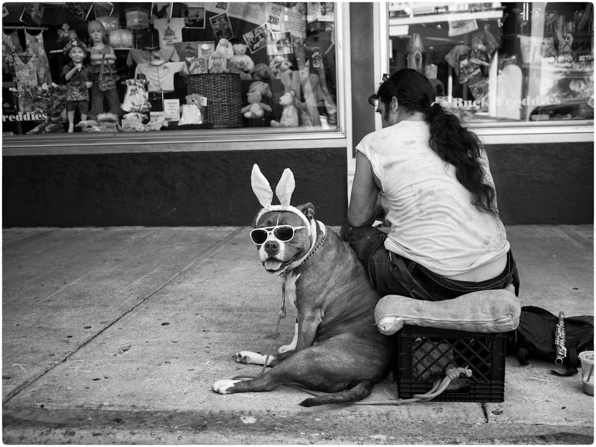 Bunny-Dog-MW