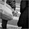 Purse-Pup-MW