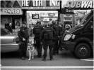SWAT-Dog-MW