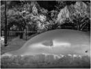 Snow-Whale-MW
