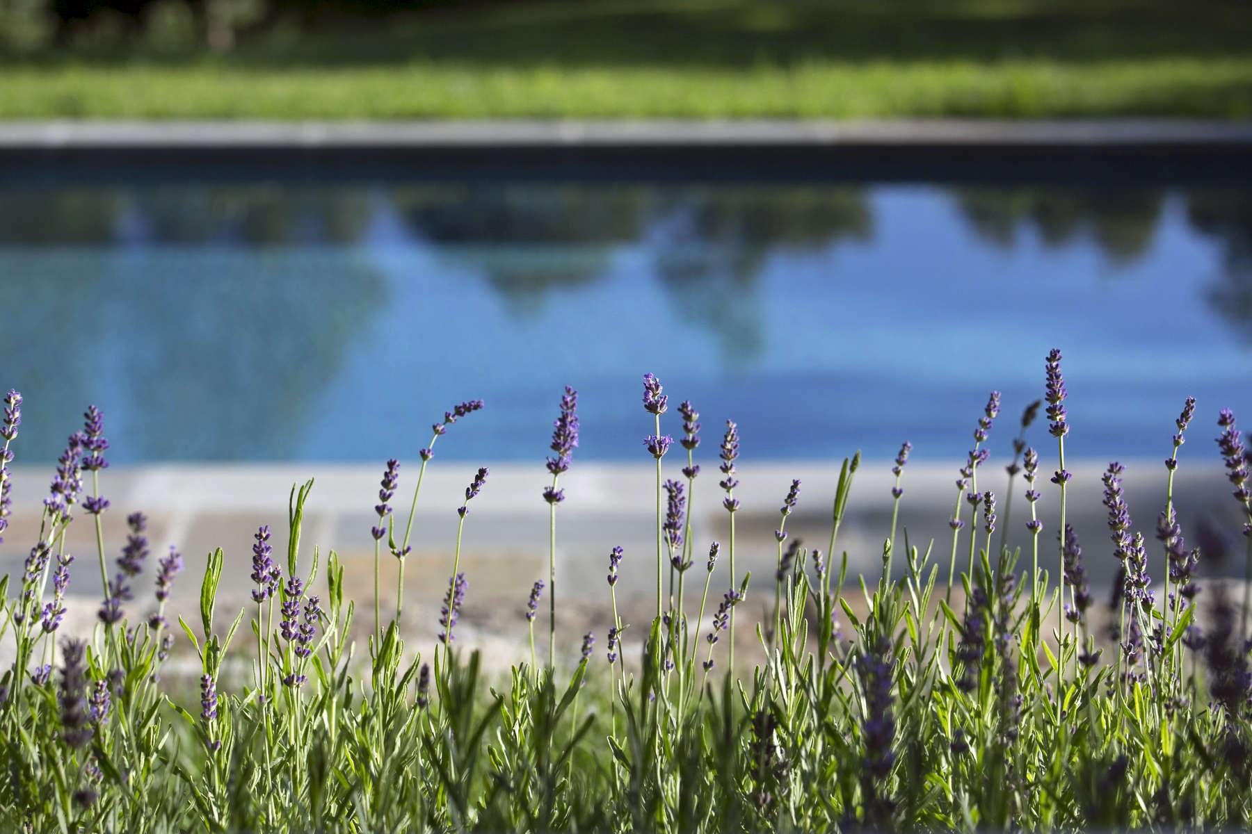 pool-lavender2