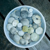sandollars, gifts, sea, collection, found, keep