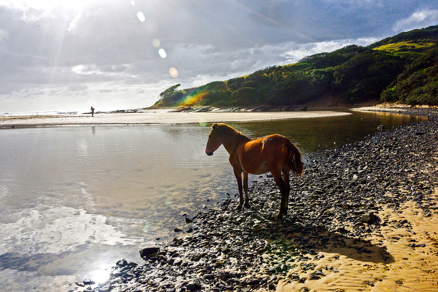 A lifestyle photo of a horse standing by the water along the Wild Coast, South Africa. There is a surfer in the distance walking towards the ocean with mountains in the background.